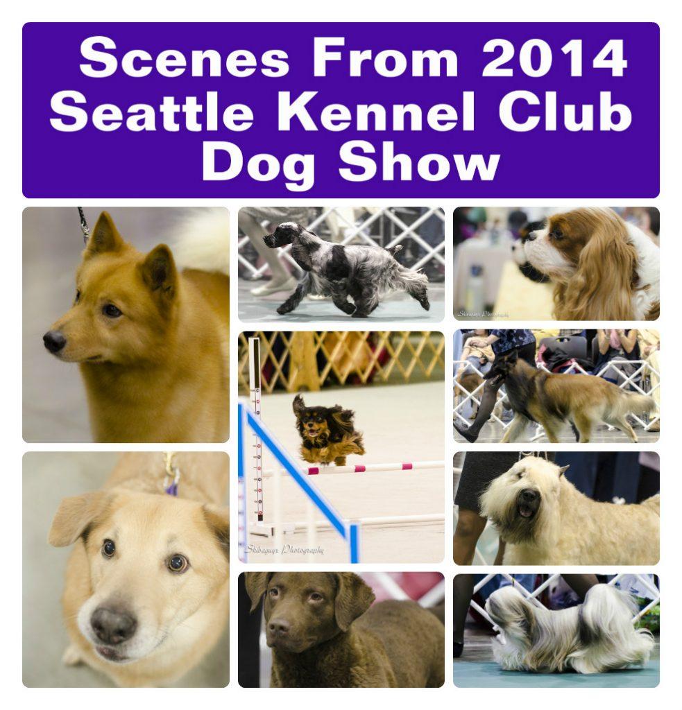 Shibaguyz Photography SCK 2014 Dog Show Scenes