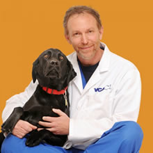 Dr. James Gaynor, of Frisco, Colo., is recognized as one of the top authorities of veterinary pain management worldwide.