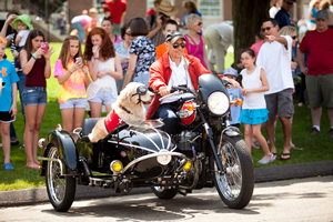 Danny Klein, of New Haven, Conn., and Remy, his Golden Retriever therapy dog, arrive in style at the Newtown thank-you ceremony.