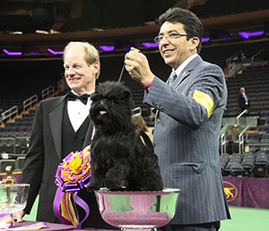 Everyone's all smiles here, including Dougherty, handler Ernesto Lara and this year's Westminster popular winner, Banana Joe, the Affenpinscher, who makes himself comfortable in the winner's bowl.