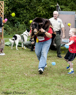 At a Riverdog Canine Coaching event in Issaquah in mid-September, a Washington State Department of Fish and Wildlife employee plays a bear fleeing the scene of a release. Officer Bruce Richards and Karelian Bear Dog Savute are in the background. The public was invited to participate in the demonstration by yelling and screaming and throwing plastic balls at the two-legged bear on the move.