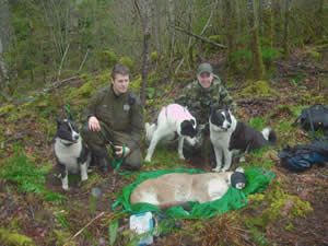From left, Colter and Jorg, Savute and Moszeter, along with Mishka, pause for a few moments behind a tranquilized cougar, which was released several hours later in the wild.