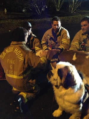 The Gordons' St. Bernards were perfect therapy tool s for exhausted Sandy Hook Fire Dept. personnel hours after the mass shootings at the nearby elementary school last December.