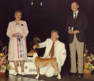 SKC Best in Show Winner<br>Basenji Ch. Rameses Golden Phoenix,FCh.<br>The first Field Champion sighthound to ever win Best In Show with Owner/Handler, Ken Leighton